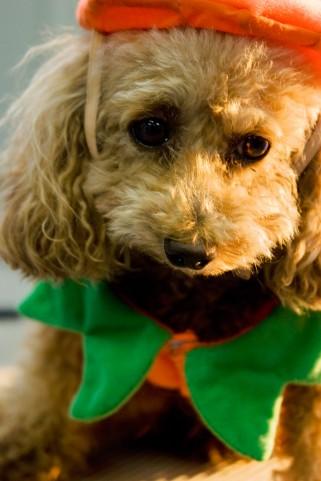 ハロウィンの犬