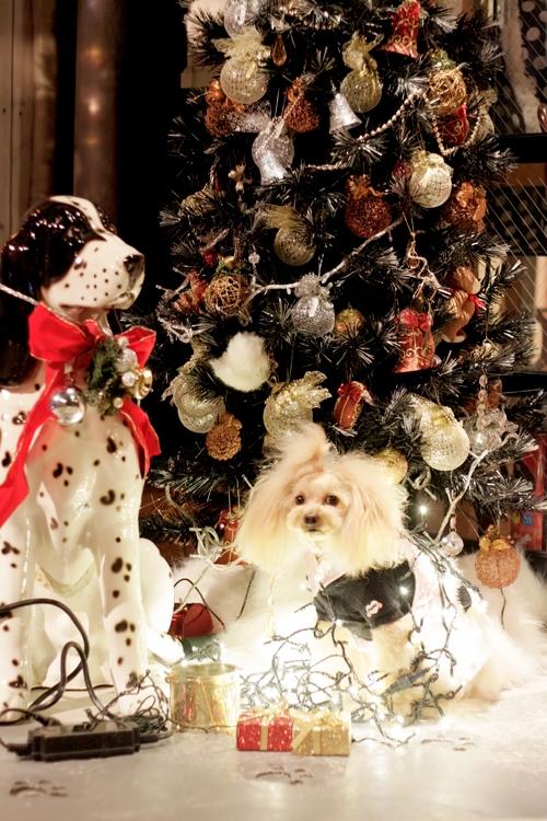 犬 クリスマス