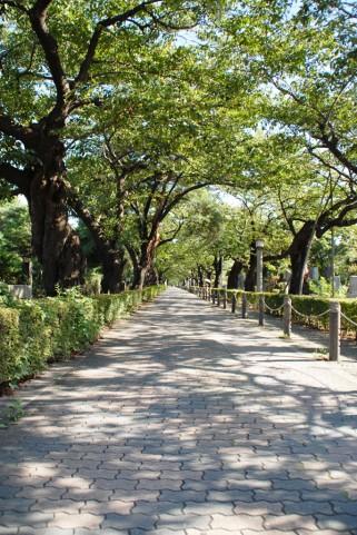 墓地の街路樹